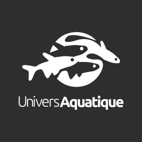 Pelvicachromis taeniatus bandewouri 4 - 5 cm