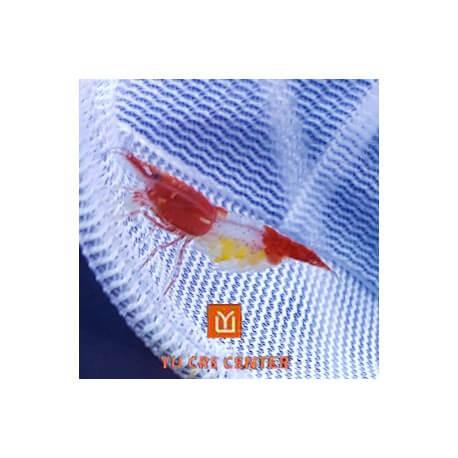 Crevette Red Rili Select