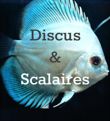 Discus & Scalaires