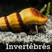 Invertebrés